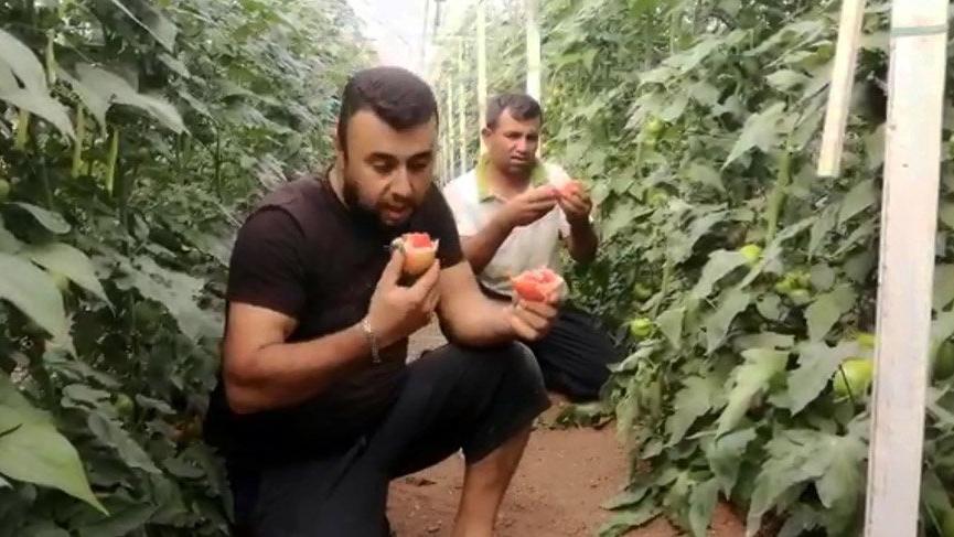 Canan Karatay'ı domates yiyerek protesto ettiler