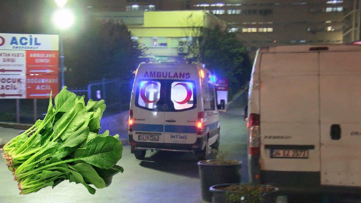 İstanbul'da Ispanak alarmı! Ispanak zehirlenmeleri artıyor...