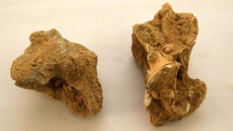Isparta'da bulundu! Tam 8 milyon yıllık...