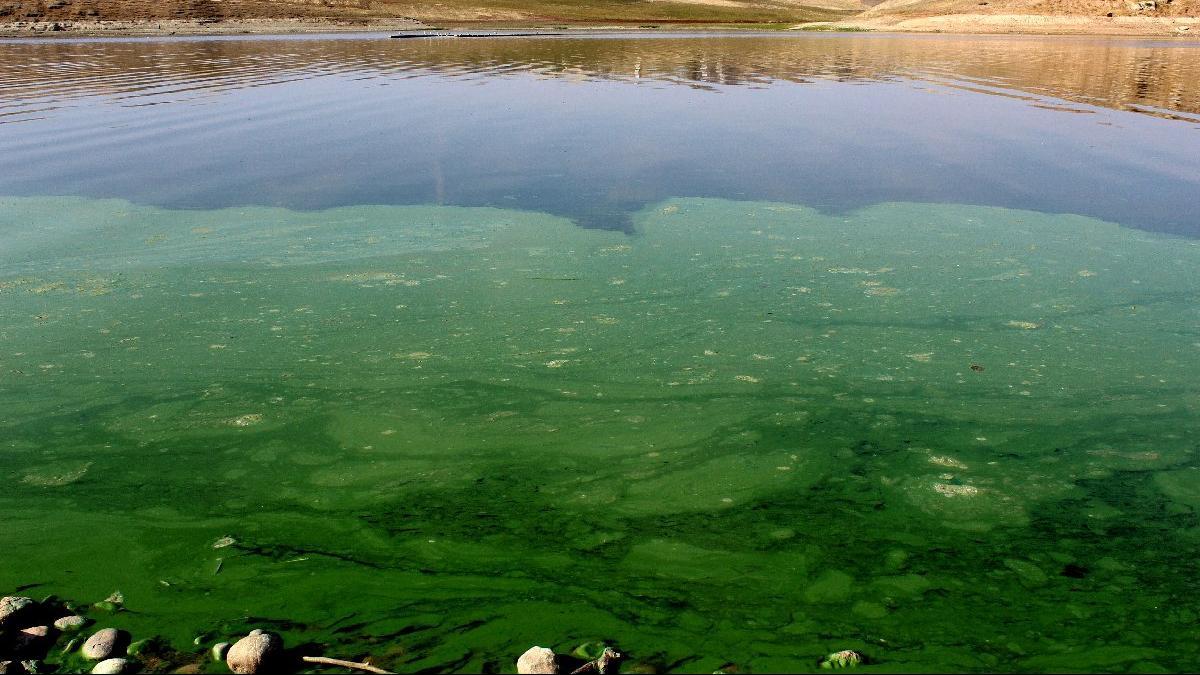 Atatürk Baraj Gölü'nün rengi yeşile döndü