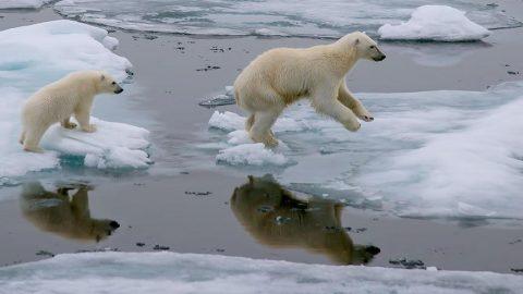 Türk denizciler iklim değişikliği felaketine dikkat çekiyor