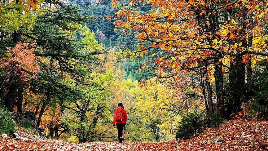 Sonbaharın gözdesi: Kasnak Meşesi Ormanı