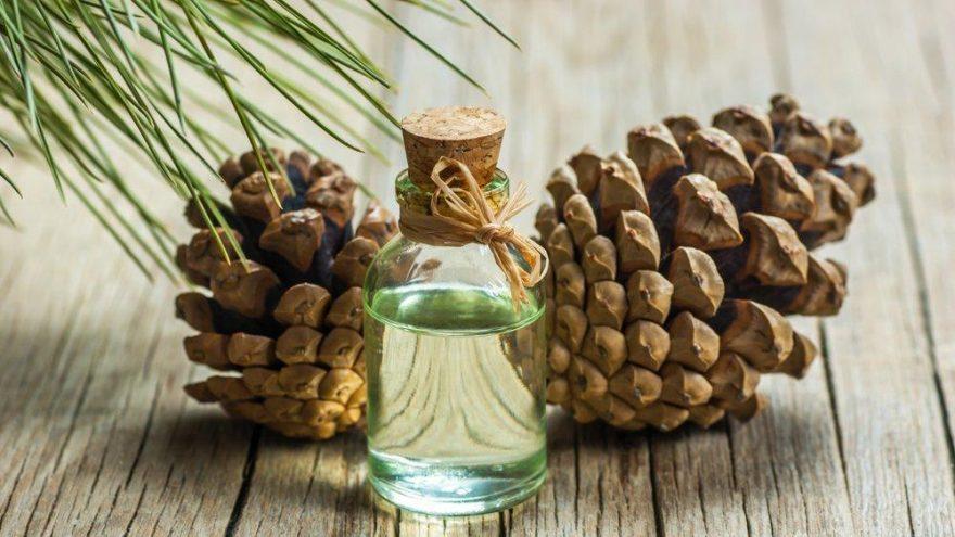 Çam terebentin yağı cilde nasıl kullanılır? Kısaca faydaları nelerdir?