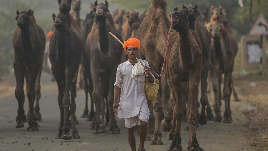 Dünyanın akın ettiği Pushkar Deve Fuarı