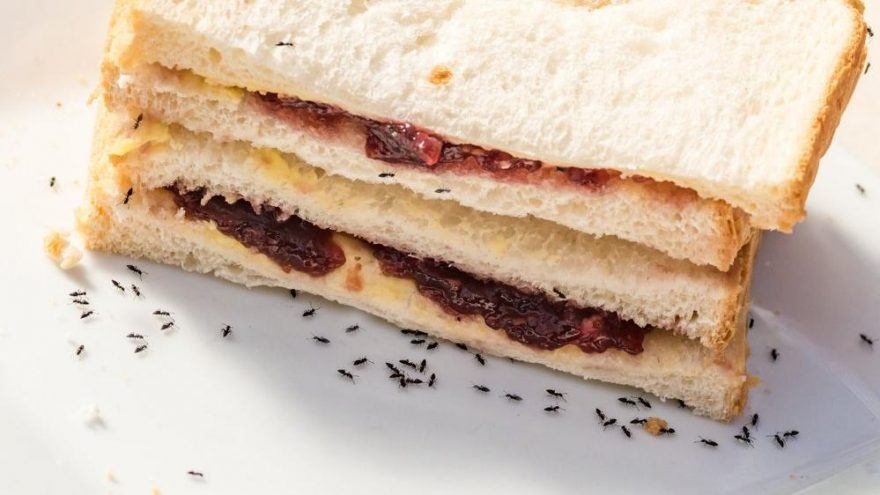 Karıncaya kesin çözüm önerileri… Evde yapılabilecek karınca engelleyiciler neler?