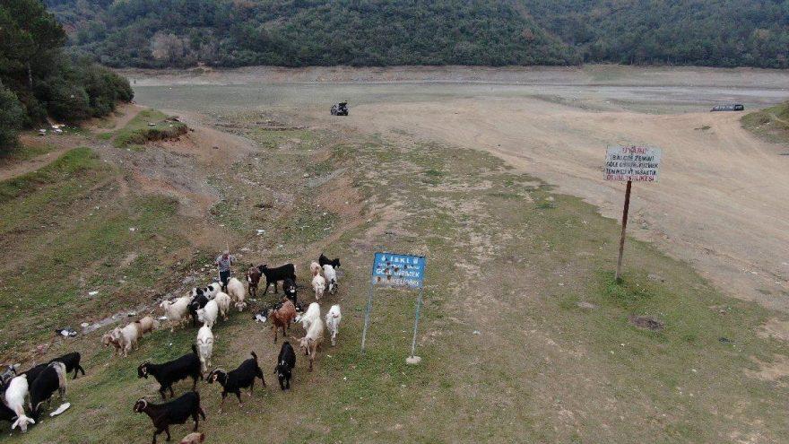 Balıkların yüzdüğü yerde şimdi keçiler otluyor