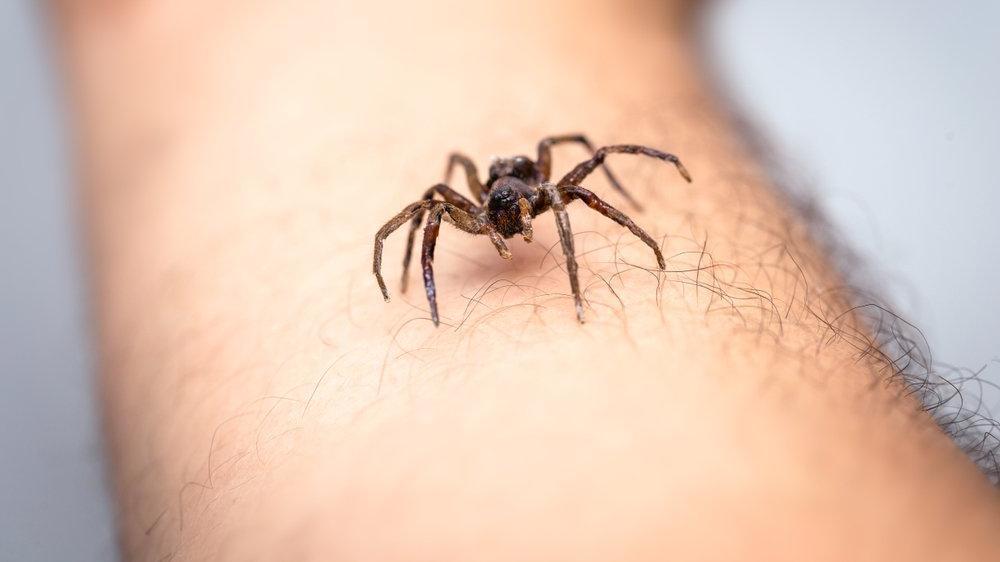 İnsanlar örümceklerden neden korkar?