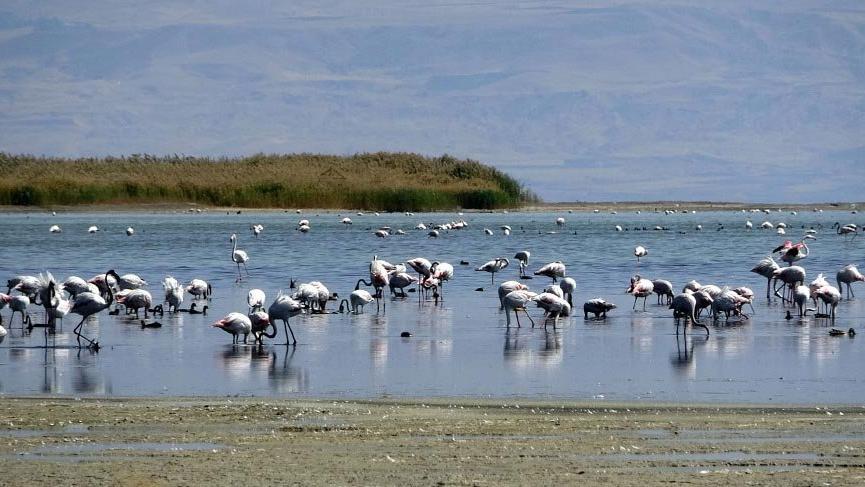 Erciş'te kuş gözlem istasyonu kurulacak