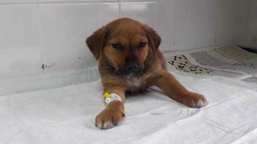 Esenyurt'ta taksinin ezdiği yavru köpekten iyi haber geldi