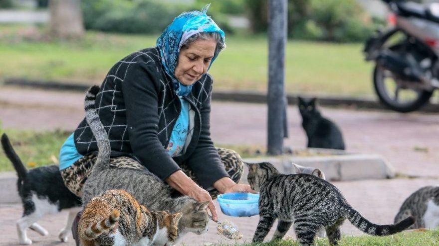 Yaz kış demeden parkta yaşayan 150 kediyi besliyor