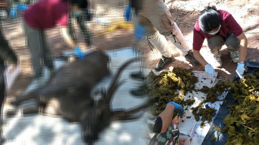Tayland'da geyiğin midesinden 7 kilogram çöp çıktı