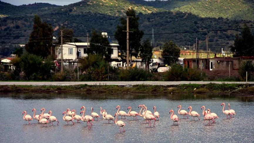 Flamingolar görsel şölen oluşturuyor