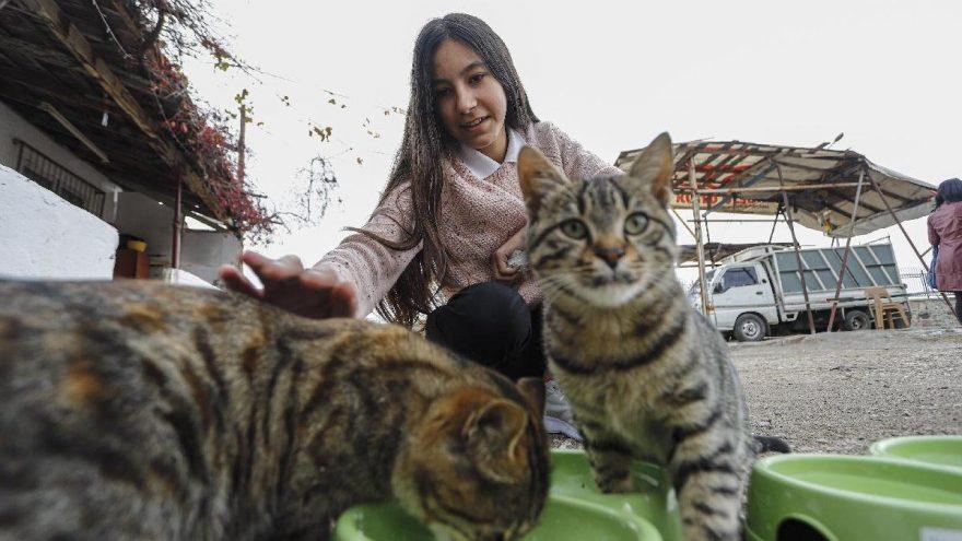 Sokak kedileri için harçlığı yetmeyince KDK'ya başvurdu
