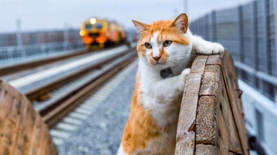 Kerç Boğazı Köprüsü'nün maskotu kedi için doğum günü partisi düzenlendi