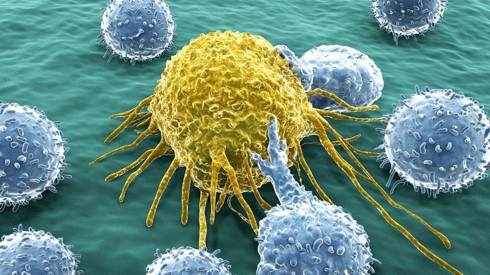 Bağışıklık sistemi ve kanserin savaşı: Mekanizma nasıl çalışıyor?