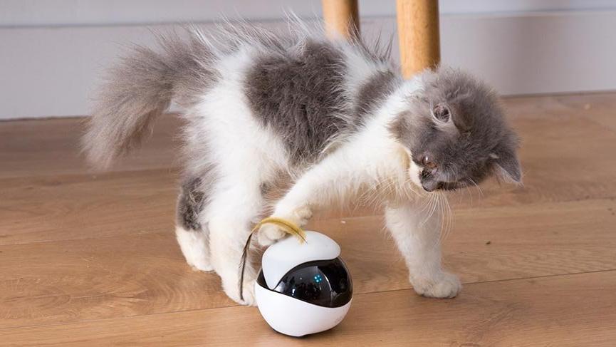 Kediler için robot oyuncak üretildi