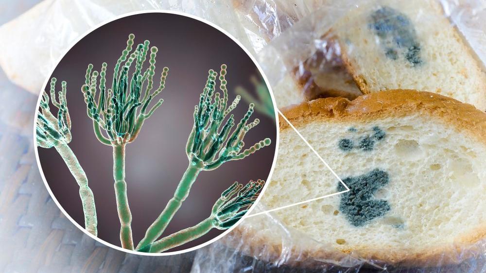 Ekmeğin küflü kısmını kesip gerisini yemek doğru mu?