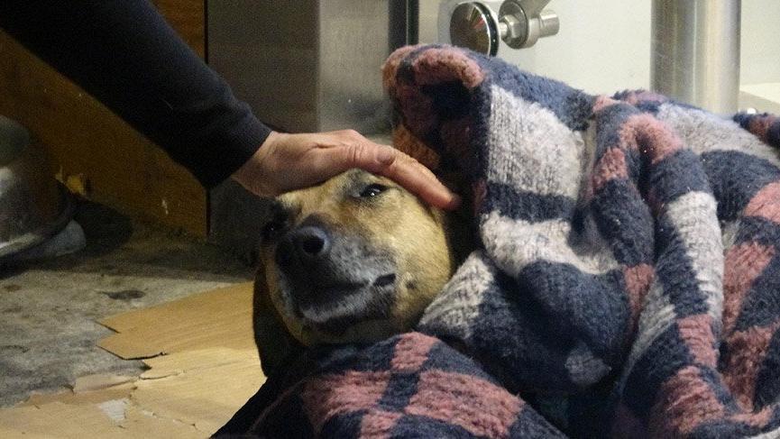 Soğuktan titreyen köpeği battaniye ile ısıttılar