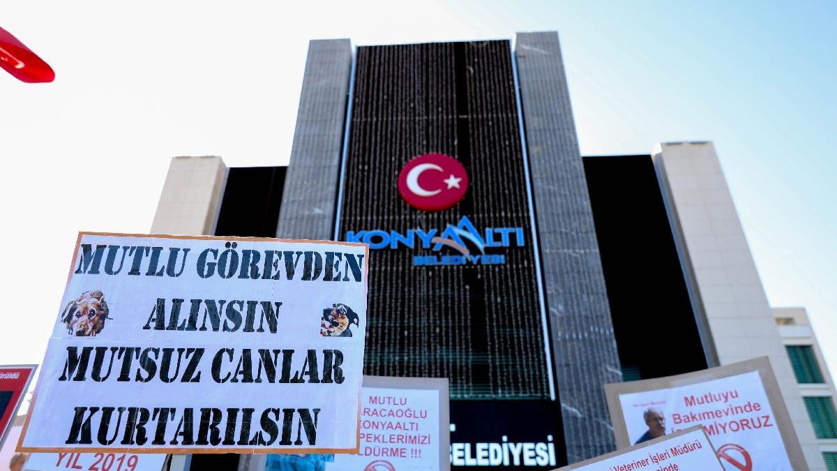 Antalya'daki köpek ölümleriyle ilgili belediyeden açıklama!