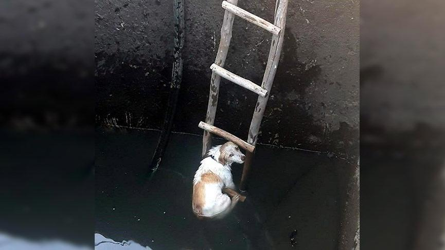 Fethiye'de su kuyusuna düşen köpeği itfaiye kurtardı