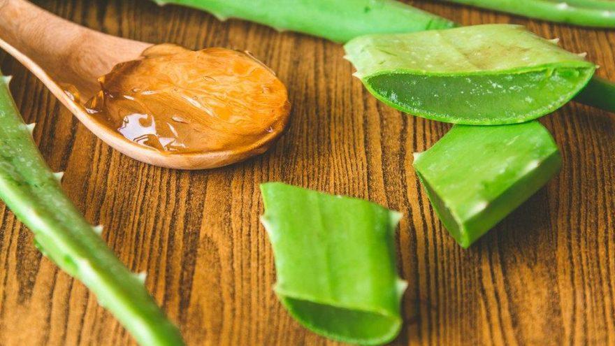 Aloe vera neye iyi geliyor? Aloa veranın faydaları nelerdir? - Güncel yaşam  haberleri