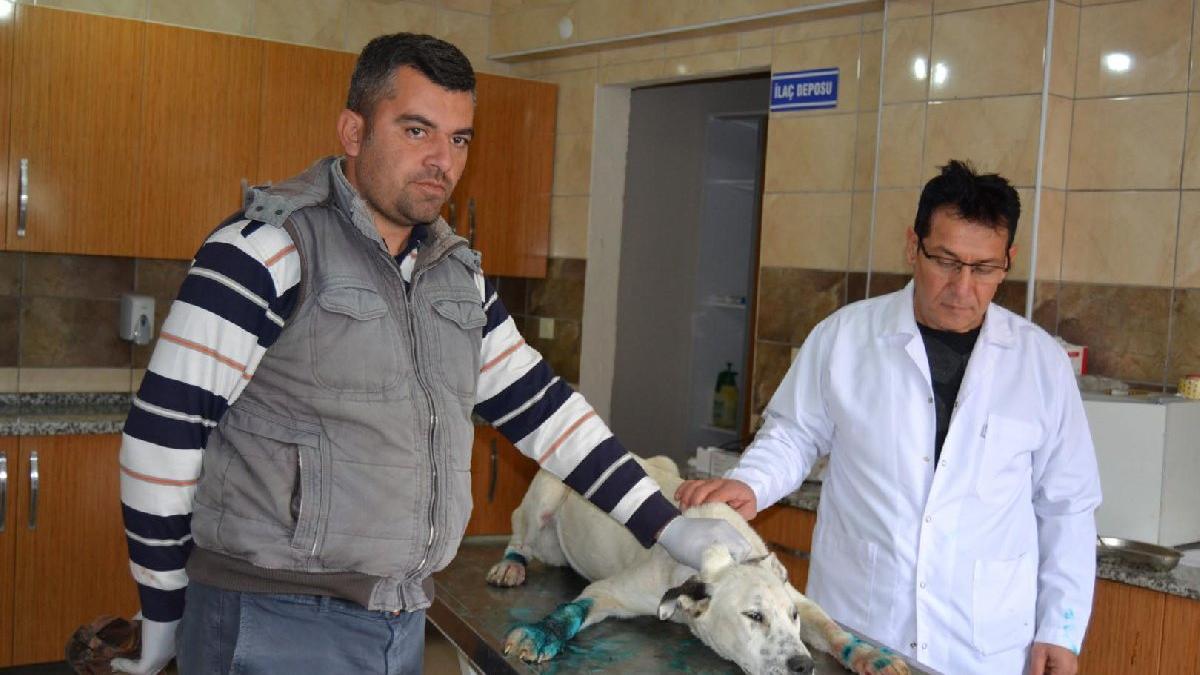 Köpeklere işkence eden 3 kişi gözaltına alındı!