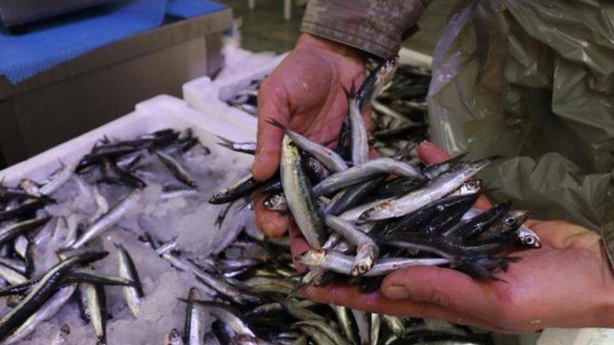 Hamsi erken göç etti balıkçı umudunu çaçaya bağladı