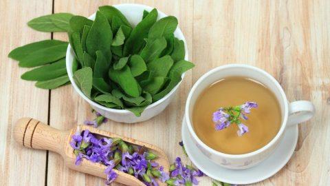 Ada çayının faydaları nelerdir? İşte ada çayının sağlığımıza yararları...