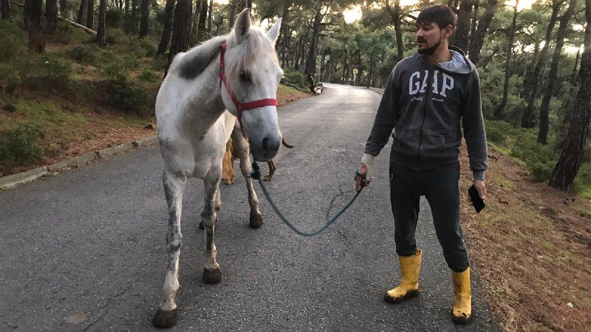 Büyükada'da 81 at itlaf edildi, Adalar'a hayvan girişi yasaklandı