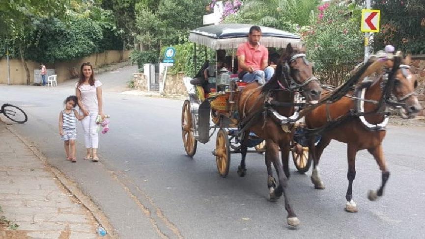 Valilikten flaş karar: Atlar 3 ay faytona koşulmayacak