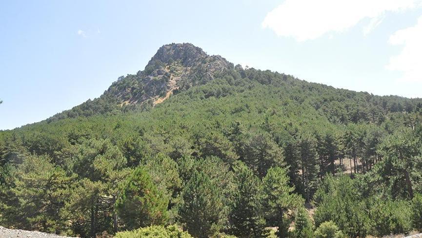 Murat Dağı kurtuldu