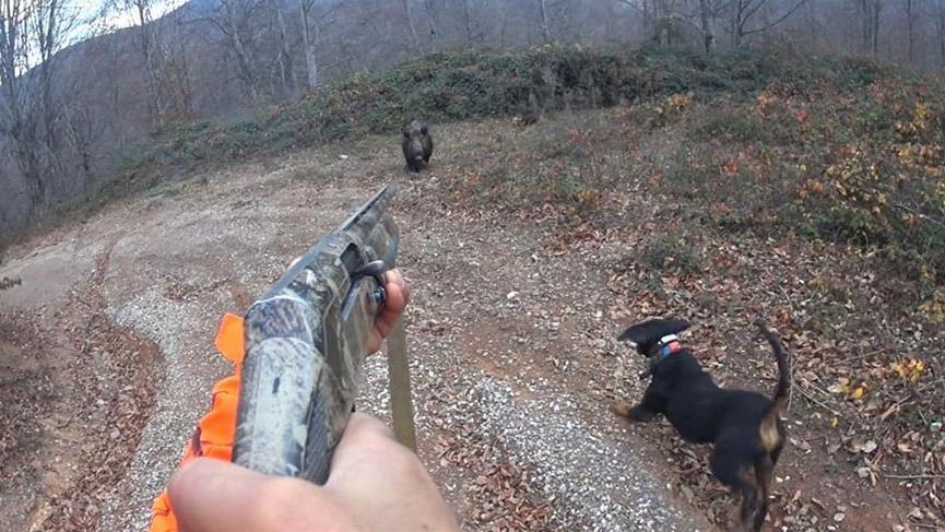 Avlamak istediği domuzunun saldırısına uğrayan avcı ölümden döndü