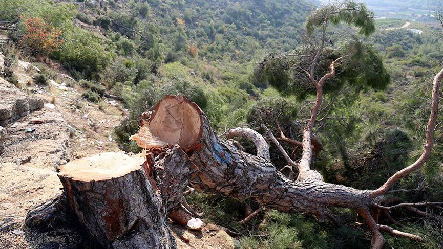 72 dönüm ormanlık alanda bin 511 ağacı kestiler, kimsenin ruhu duymadı