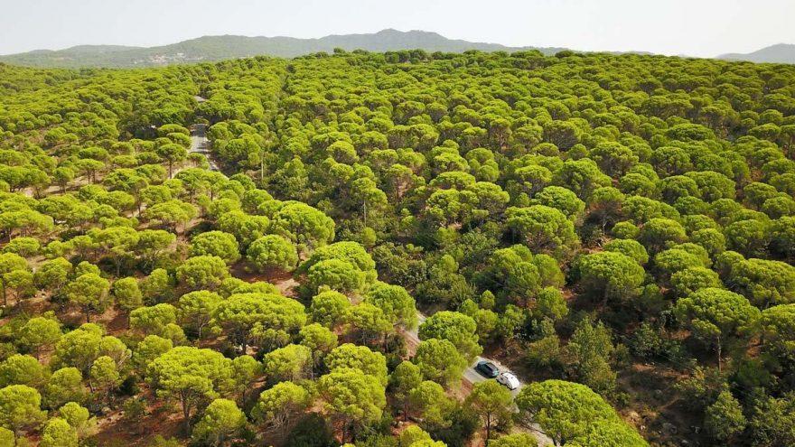 Bergamalı çevrecilerin hukuk zaferi