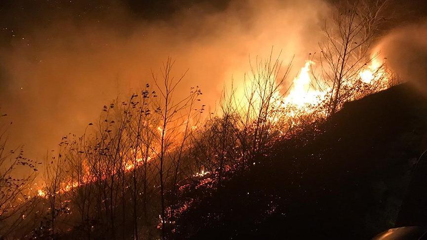 Trabzon ve Rize'de orman yangını!