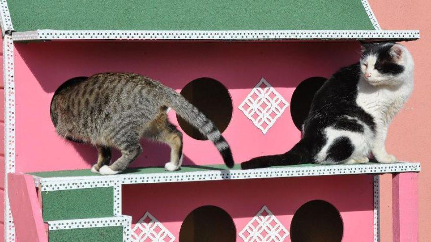 Yozgat soğuk havalarda kedileri unutmadı! Isı yalıtımlı ahşap kulübeler yapıldı
