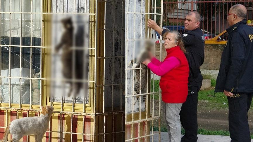 Kediyi çelik telle asarak öldüren şüpheliyi, özel ekip arıyor