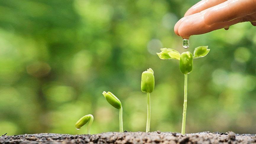 2020 'Uluslararası Bitki Sağlığı Yılı' ilan edildi
