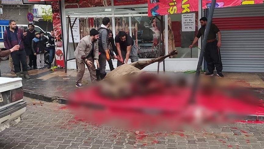 Sokakta deve kesimi işkenceye döndü, zabıta ceza kesti