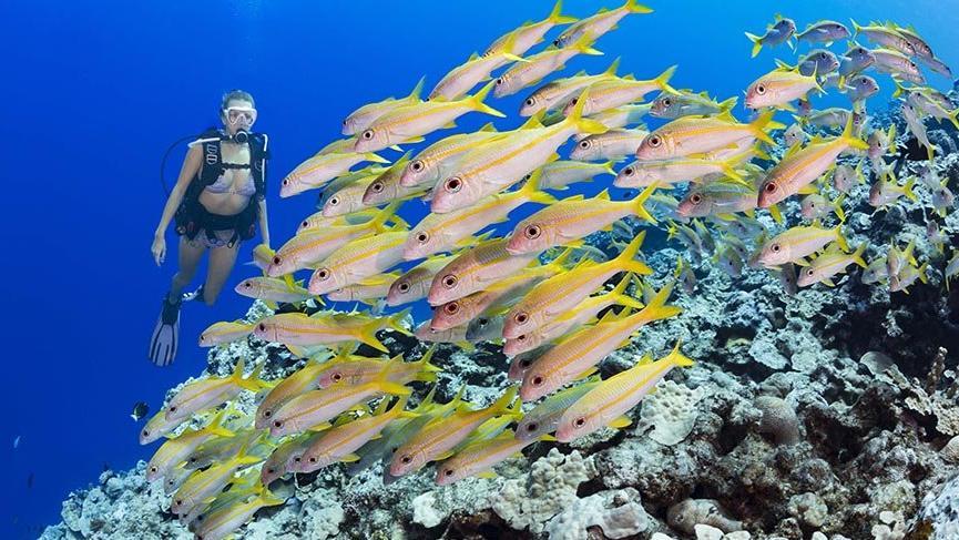 1500'den fazla balık çeşidiyle sualtı cenneti Mikronezya