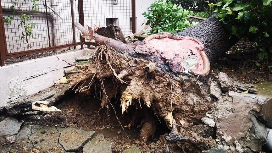 İstanbul'da fırtına ve şiddetli yağış! Evleri su bastı, ağaçlar devrildi