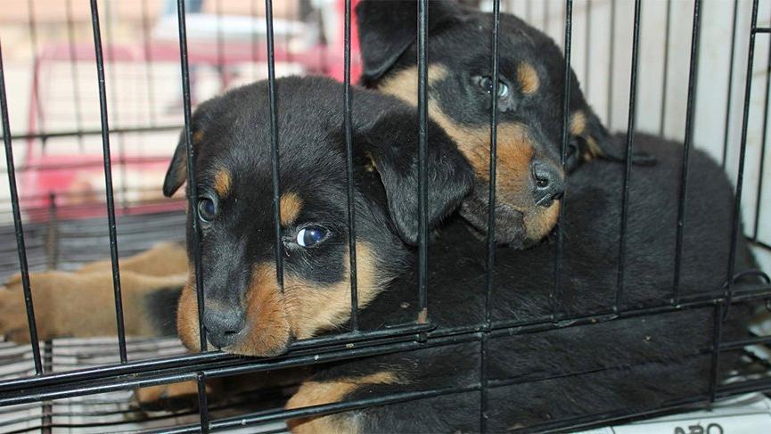 Evcil hayvanlarla ilgili dikkat çeken karar!