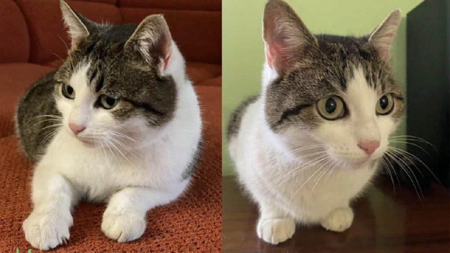 """Rusya'da doğaüstü güçleri olan """"şifacı kedi"""" 320 bin dolara satışa çıkarıldı"""