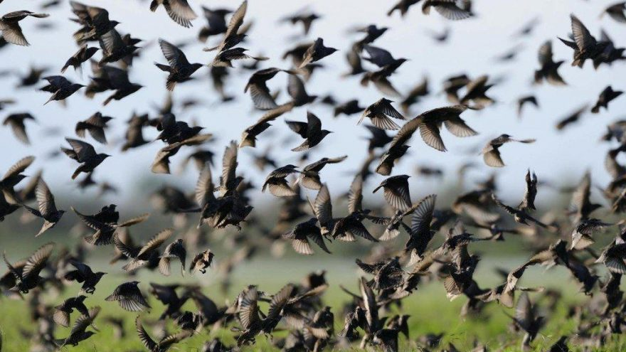 Veteriner hekimler uyardı: Ölü kuşlara sakın dokunmayın