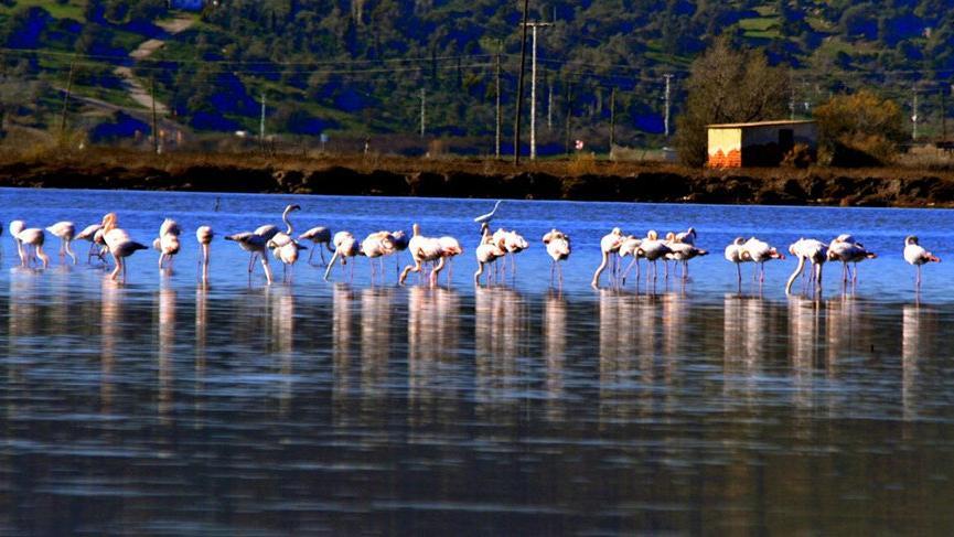 Muğla'nın kış güzelleri 'Flamingolar'