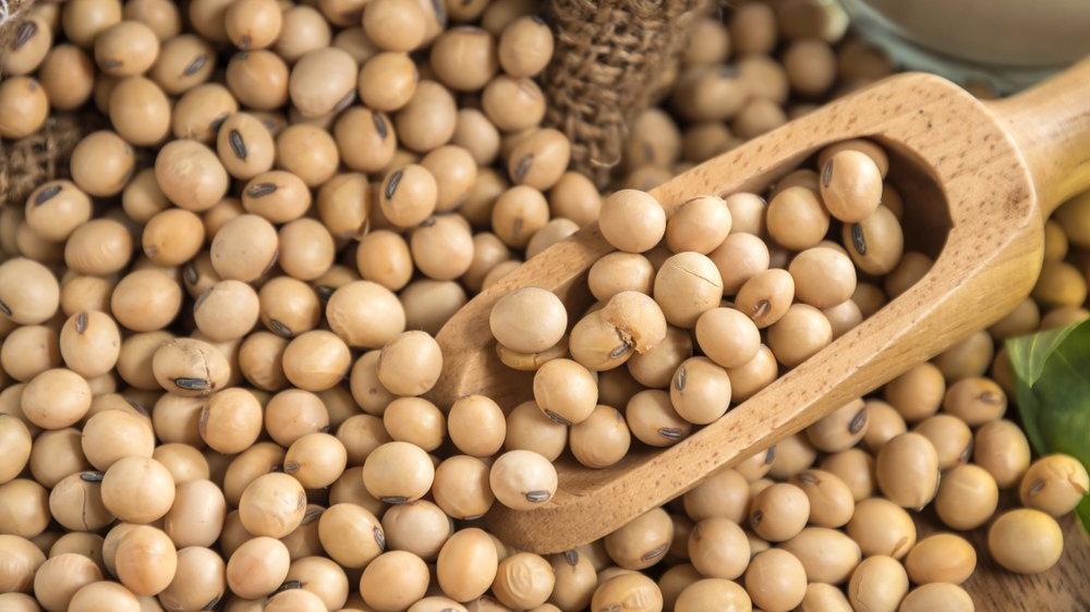 Soya fasulyesi kaç kalori? Soya fasulyesinin besin değerleri ve kalorisi...