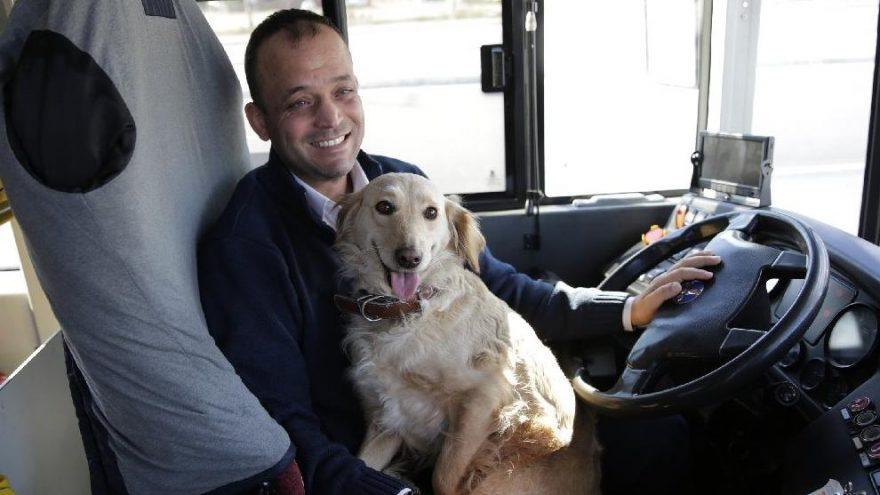 Sahibini kaybeden köpek otobüse sığındı