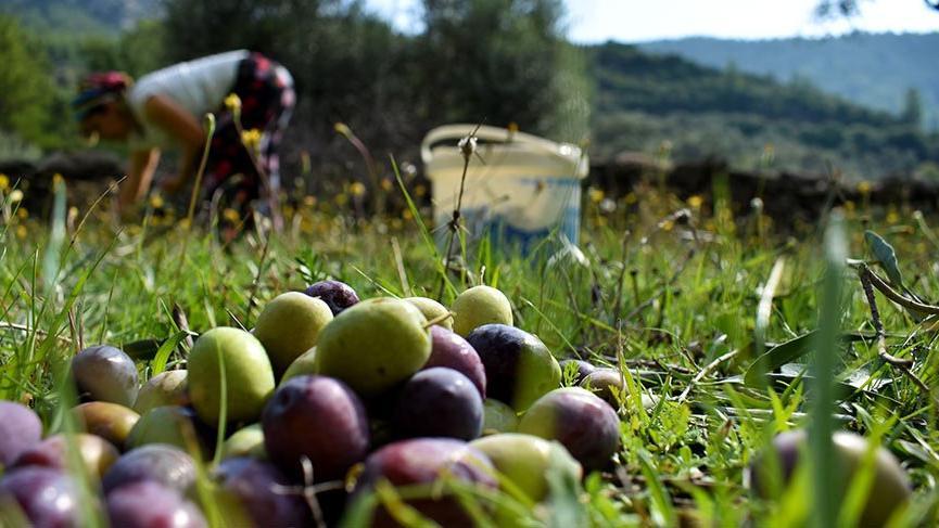 'Ucuz zeytinyağından kaçınmalıyız'
