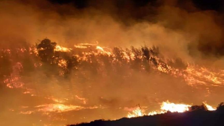 Son dakika... Adana'da iki farklı noktada orman yangını çıktı!