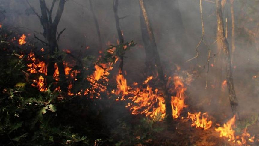 Milas ormanlarında yangına müdahale ediliyor, köylüler ayakta